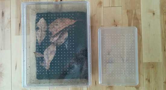 カブト虫ケース/大小比較